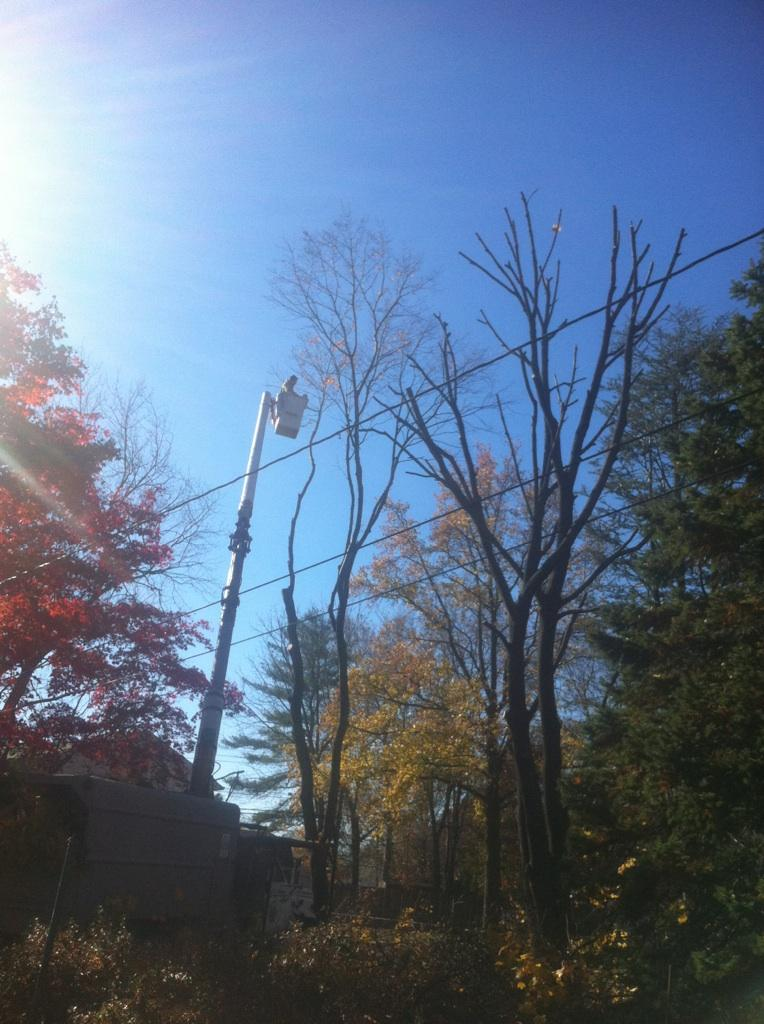 Tree Trimming in Haverford PA