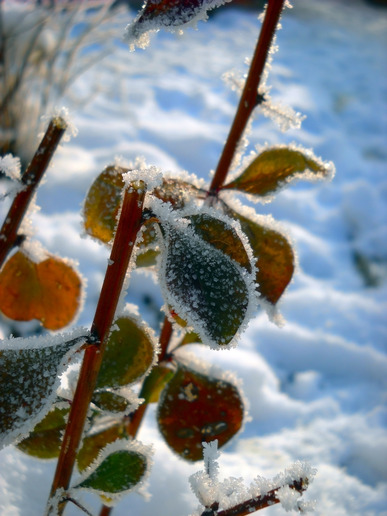 Winter Landscaping Tips for Delaware County